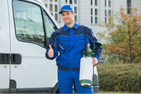 residential pest control West Auckland